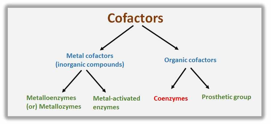 Examples of Cofactors and Coenzymes